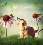 dog with echinacea